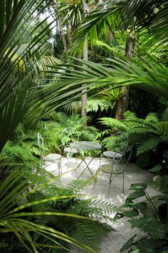 Garden Landscaping with Palms The white pebbles look great amongst the tropical plants. Tropical Landscaping, Tropical Plants, Garden Landscaping, Tropical Gardens, Gravel Garden, Small Gardens, Outdoor Gardens, Modern Gardens, Landscape Design