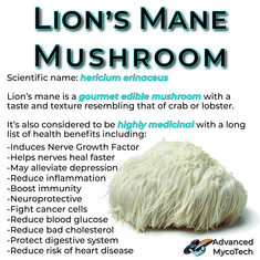 Info and health benefits of lion's mane mushrooms Health Benefits Of Mushrooms, Mushroom Benefits, Healing Herbs, Medicinal Herbs, Herbal Tinctures, Herbalism, Growing Mushrooms At Home, Healthy Groceries, Plant Based Nutrition