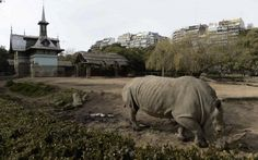 The Mayor of Buenos Aires has announced that he will be closing the city's 140-year-old zoo because captivity of these animals is