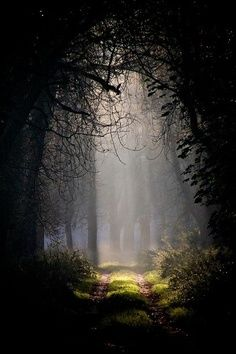 The enchanting mist surrounds you as you enter the new possibilities that lie ahead in your limitless imagination.