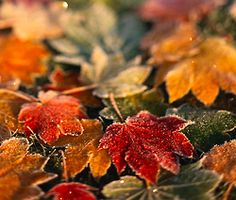 349 best autumn leaves pumpkins images on pinterest autumn
