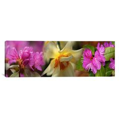 "East Urban Home Panoramic Details of Flowers Photographic Print on Canvas Size: 12"" H x 36"" W x 1.5"" D"