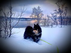 Snow, Dogs, Animals, Outdoor, Animais, Outdoors, Animales, Animaux, Pet Dogs