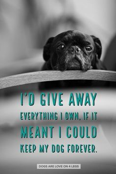 I'd Give Away Everything I Own If It Meant I Could Keep My Dog Forever Dog Dog Quotes Inspirational Quotes Funny Quotes Life Quotes Pug Love, I Love Dogs, Cute Dogs, Pugs, Animals And Pets, Cute Animals, Dog Shaming, Animal Quotes, My Animal