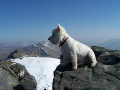 Hamish on The 5 Sisters Ridge