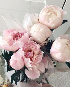 Ideas For Flowers Wallpaper Rose Peonies Peonies Bouquet, Pink Peonies, Peony, Ranunculus Flowers, Yellow Roses, Bouquets, Amazing Flowers, Beautiful Flowers, Exotic Flowers