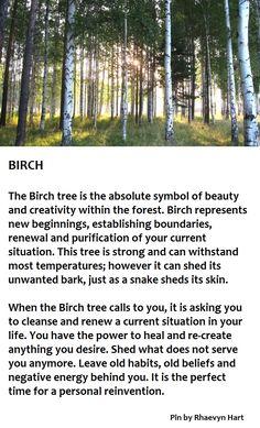 Birch Tree                                                                                                                                                                                 More
