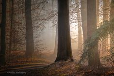 8 - Bosfotografie Blur, Trunks, Tips, Plants, Drift Wood, Tree Trunks, Plant, Planets, Counseling