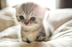 Kittens may be the cutest thing in the world. The only problem is that I don't like when they grow up...