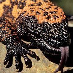 Sonoran Desert Animals Desert Animals Deserts And Animal