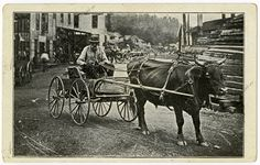 Man driving an ox drawing cart in Winslow, Arkansas. Arkansas History Commission G2698.87