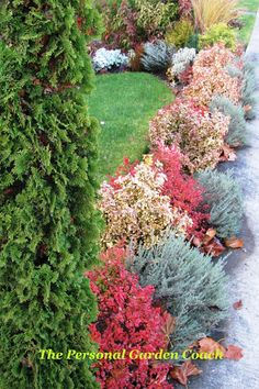 Autumn colors in the border. No flowers needed! #Foliage