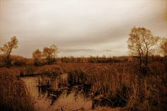 Prairie Wetland in Fall copy