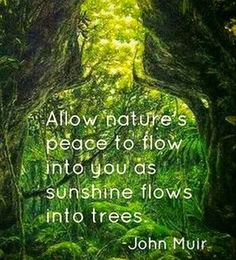 Nature is my happy place.  #getoutside Tree Quotes, Quotes Quotes, Qoutes, Quotes About Trees, Quotes About Nature, Green Nature Quotes, Start Quotes, Photo Quotes, John Muir Quotes