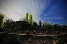 """Chihuly in the (Desert Botanical) Garden"""