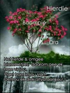 Lekker Dag, Goeie More, Inspirational Qoutes, Afrikaans Quotes, Love Rose, Good Morning Wishes, Birthday Wishes, Herbs, Plants