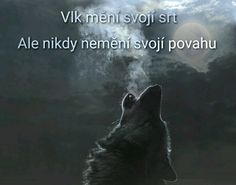 O vlcích Psi, Be Yourself Quotes, Wolf, Inspiration, Biblical Inspiration, Wolves, Inspirational, Inhalation, Timber Wolf