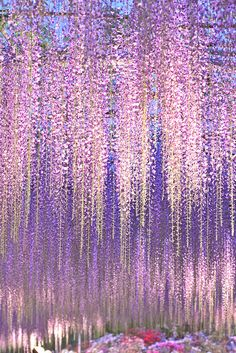 lifeisverybeautiful:  wisteria by slyfox1 on Flickr.Wisteria