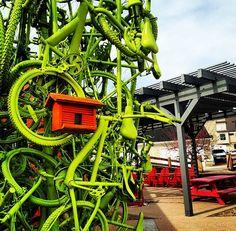Stapleton #Art! #Bike #Tree #Birdhouse. #LoveStapleton