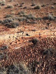 Petrified Wood in the Petrified Forest National Park, Arizona. Interesting but, the pieces of wood are actually all rock. Petrified Forest National Park, Best Campgrounds, Petrified Wood, Grand Canyon, Arizona, National Parks, America, Rock, Pictures