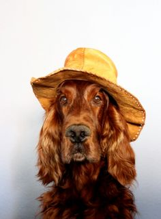 My #soulmate #dog Flynn, an #Irishsetter boy...meet him on http://hundebloghaus.de