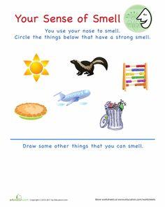 Worksheets: Sense of Smell
