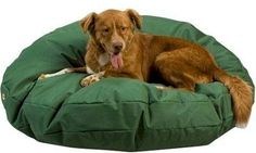 Snoozer Waterproof Rectangle Pet Bed Small Navy 28 by 45Inch * For more information, visit image link.