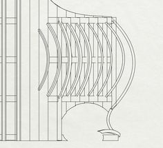 Elevation of the front of the parasite
