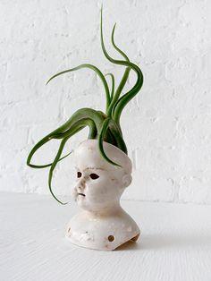 Stoned Medusa- Antique German Bisque Doll Head Air Plant Garden ($95)