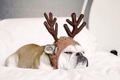 Christmas Dogs. Too cute!