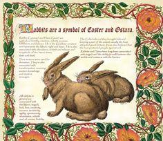 Ostara rabbits