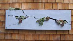 horizontal succulent planter