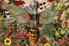 Ciencias Naturales V Metamorphosis - by the Argentinean, Juan Gatti, whose lesser known work includes anatomy drawings of the human body in combination with the taxonomy of plants and animals.