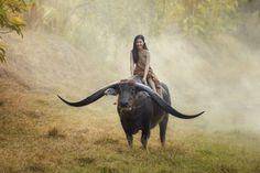 women animals mist HD Wallpaper Desktop Background