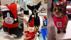 Pour les fêtes, le refuge 30Millions d'Amis de la Tuilerie (77) a reçu de très nombreux cadeaux destinés aux animaux abandonnés ou sauvés de la maltraitance. La Fondation 30Millions d'Amis remercie les « bonnes fées » qui, chaque ann Fondation Brigitte Bardot, Refuge, Elf, Holiday Decor, Outdoor Decor, Dog Breeds, Animal Protection, Pets, Elves