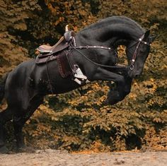 Nice horse tucked in a rear and jump.
