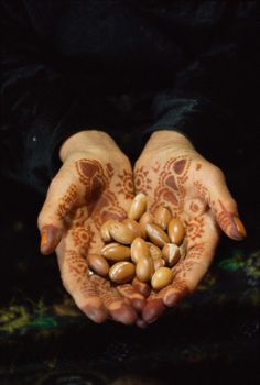 Freshly picked Argan nuts. The Argan tree changed the cosmetics industry forever. It used to be consumed sustainably by the berber tribes of southern Morocco, but in the late 80's the Moroccan government saw a huge opportunity to industrialize its production and export it worldwide and today it became an endangered tree.