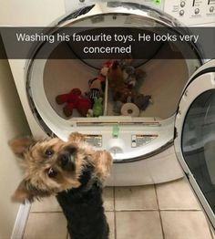 22 Funny Animal Pictures Of The Day Funny Pictures updated daily. Funny Pics Funny Memes and Funny Animal Best Funny Animal Fails Compilation June, 2018 Funny Animal Memes, Dog Memes, Funny Animal Pictures, Cute Funny Animals, Cute Baby Animals, Funny Cute, Funny Dogs, Animal Pics, Funny Memes