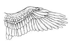 There are a few things every artists should be able to draw, with wings being certainly one of them. In this tutorial I& show you how birds& and dragons& wings are built, why they& built this. Wings Sketch, Wings Drawing, Bird Sketch, Raven Wings, Owl Wings, Eagle Wings, Wing Draw, Tattoos Skull, Animal Tattoos