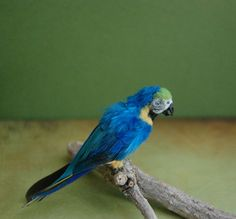 realistic Macaw dollhouse miniature 1:12 scale bird handmade sculpture by Reve