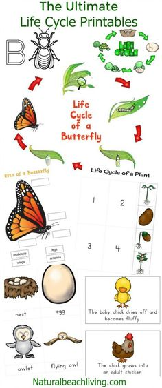 The Ultimate Life Cycle Printables