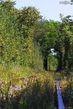 Tunelul iubirii- Obreja, Caras-Severin, ROMANIA