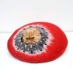 I love this funny sleeping cat #funnycat #funnycats #cats