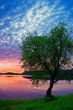 HAVE A NICE DAY — mvnchies: Lake & tree by Kaarin Vask