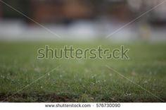 grass background bluured