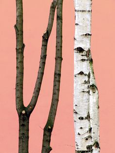// Heidi Specker // Trees