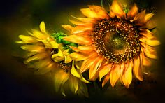 abstract sunflower facebook cover - Google Search