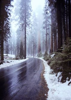 This picture is everything. Cold, snow, winter, trees, nature.