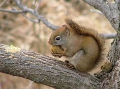 not a white squirrel, a red squirrel and a little, cute one too
