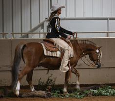 *Holyoake Copper-Field LOM/AOE SCW Imported Section B Stallion - Sterling Creek Welsh